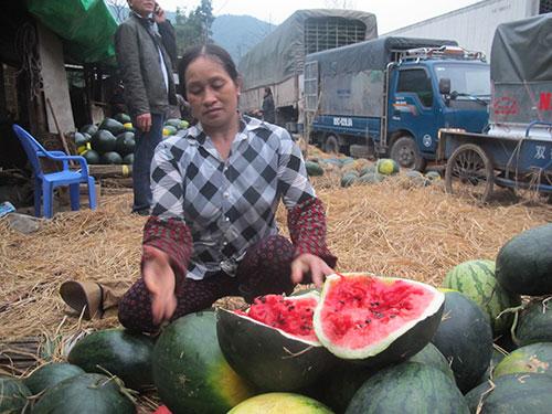 Nỗ lực giải cứu trái cây bị ùn ứ
