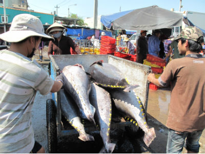 Nghiên cứu đề xuất gói hỗ trợ thủy sản