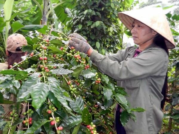 Đắk Lắk xuất khẩu càphê sang 60 quốc gia và vùng lãnh thổ
