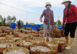 Phú Yên: Ngư dân kiếm bạc triệu mỗi đêm nhờ