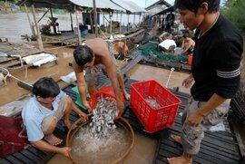 An Giang: Thu bạc tỷ nhờ nuôi cá heo nước ngọt