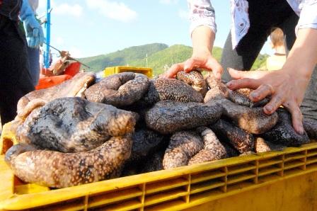 Lỗ nặng khi gom con banh lông bán cho thương lái Trung Quốc