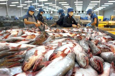 Thuế chống bán phá giá ca tra đối với các doanh nghiệp Việt Nam tăng lên 2,11 USD mỗi kg, thay vì mức 0,42% USD mỗi kg như đã công bố hồi tháng 3.