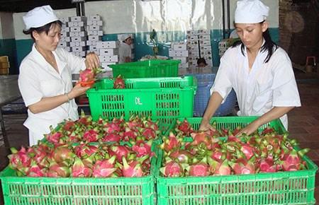 Giảm xuất khẩu sang Trung Quốc để bớt lệ thuộc