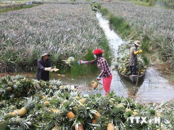 Nhiều loại trái cây ở đồng bằng sông Cửu Long tăng giá trở lại