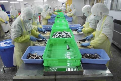 Công an 'truy' công ty Đài Loan xuất cá bẩn sang Nhật
