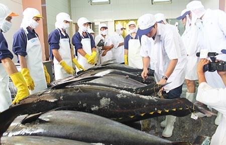 """Người """"chắp cánh"""" cho cá ngừ sang Nhật"""