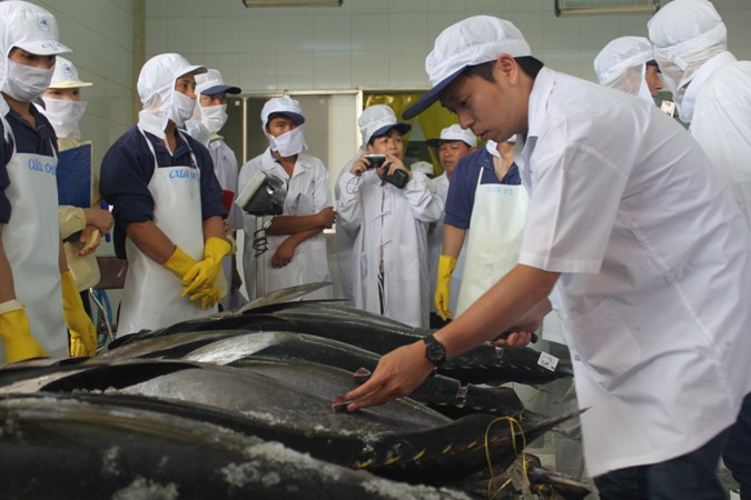 Chuyên gia Nhật Bản kiểm tra chất lượng cá ngừ đại dương được đánh bắt theo công nghệ Nhật