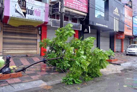 Sáng nay gió vẫn thổi mạnh, nhiều cây xanh vẫn còn nguy cơ bị gãy đổ.