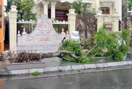 Cây xanh ven đường biển thành phố Hạ Long bị bật gốc
