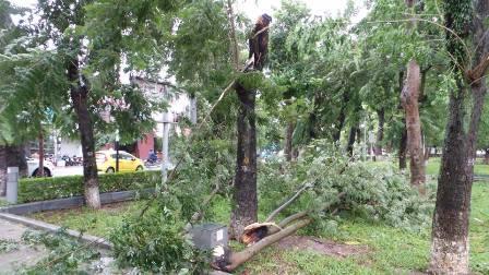 Nhiều cây cổ thụ trong diện bảo tồn cũng bị thiệt hại nặng