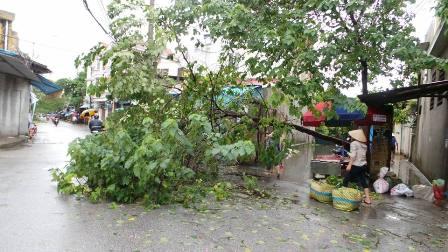 Ngập lụt và cây xanh đổ trên đường Vũ Chí Thắng - TP Hải Phòng (Ảnh: Thu Hằng).