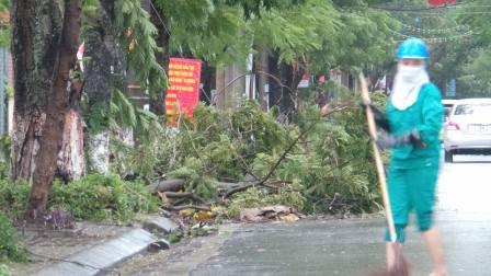 Đường Lê Đại Hành nhiều cây lớn gãy đổ