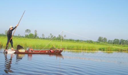 Nếu đồng ruộng nào nước sâu thì người đẩy côn có thể đứng trên xuống dùng xào để đẩy xuồng đi tới