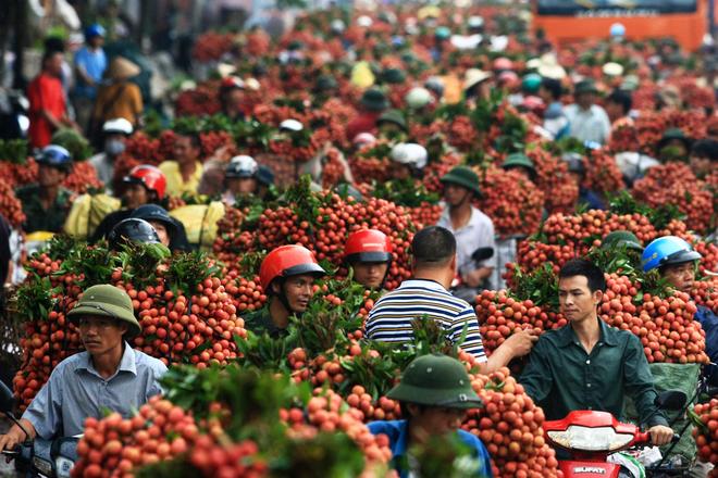 Tìm cách giảm lệ thuộc Trung Quốc tại mặt hàng hoa quả