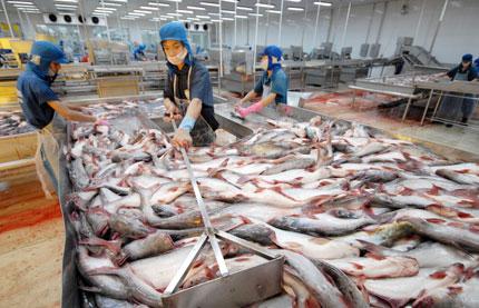 Hiệp hội cá tra