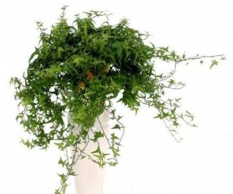 5 loại cây xanh nên trồng để không khí ngôi nhà trong lành