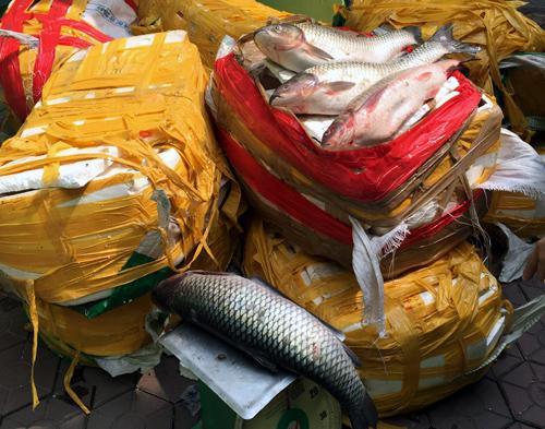 cá-quả, hàng-Tàu, cá-trăm-giòn, hóa-chất, nho, Tung-Quốc, xăng, giảm-giá, hàng-hóa, sả, đội-lốt, ưng-thư
