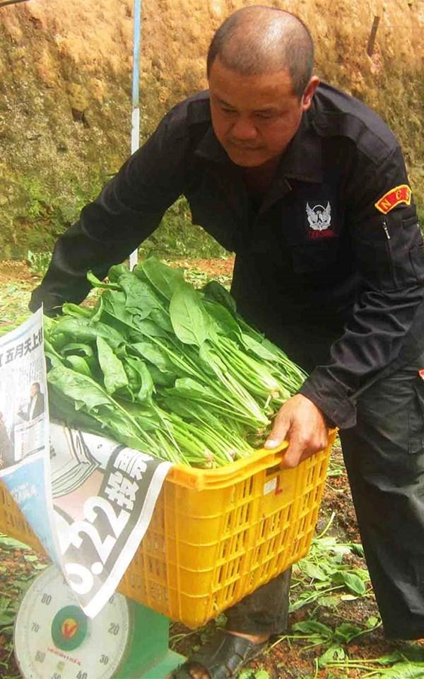 Bó xôi & tiền tỷ của anh nông dân Lâm Đồng