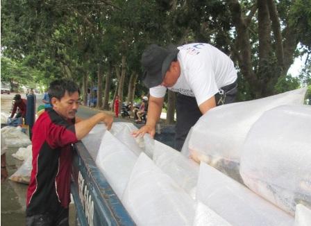 Các thương lái kiểm tra các túi cá trước khi vận chuyển về thành phố