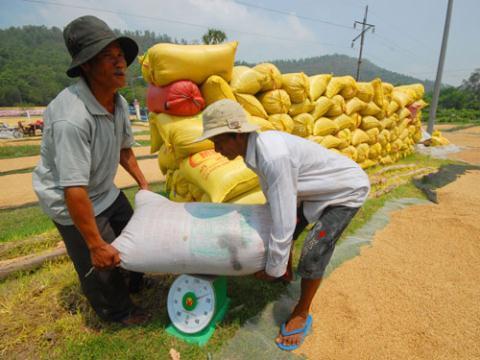 Vũ khí giá rẻ của gạo Việt: 'Thất thủ' trước Myanmar?
