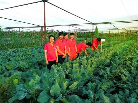 Người Hà Nội được ăn rau sạch truy xuất nguồn gốc đến tận ruộng