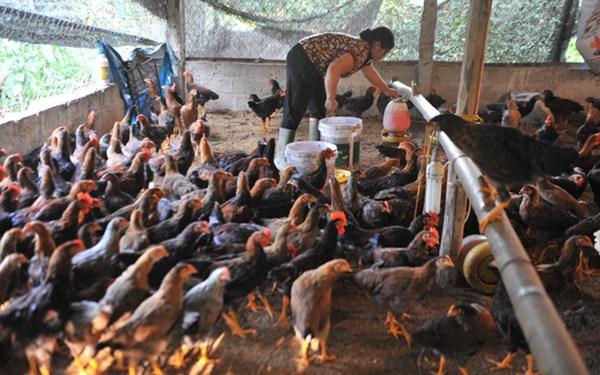 Thịt già nhập khẩu 20 ngàn/kg: Đỡ không nổi