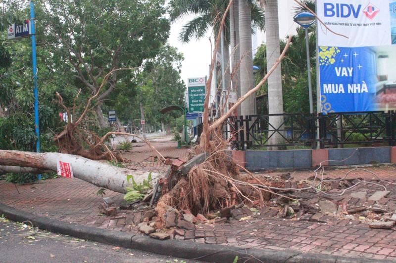 Nhiều cây xanh bị đổ, bật gốc