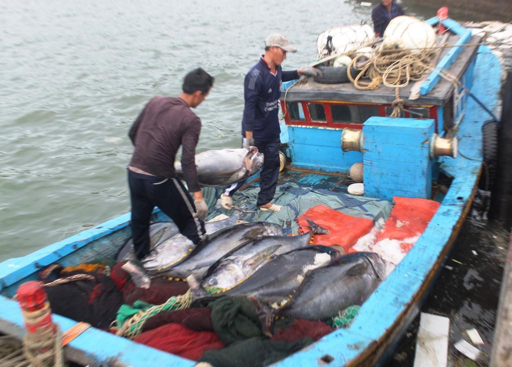 Nhiều tàu không vào được cảng phải đưa cá xuống tàu nhỏ rồi chạy vào cảng bán cá cho thương lái