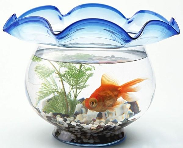 Nguyên tắc phong thủy cho bể cá cảnh
