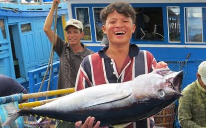 Đằng sau câu chuyện về lô cá ngừ đầu tiên sang Nhật Bản