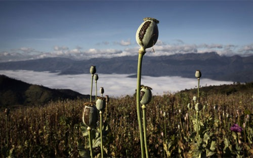 """Myanmar, """"cường quốc ma túy"""" đang trở lại"""