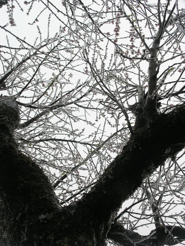 Hình ảnh Sa Pa
