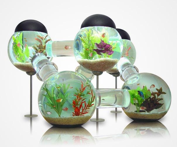 Theo phong thủy, bài trí bể cá hình tròn trong nhà mang lại vận khí tốt cho gia chủ