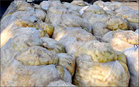 Phát hiện 43 tấn măng ngâm chất độc suốt 2 năm