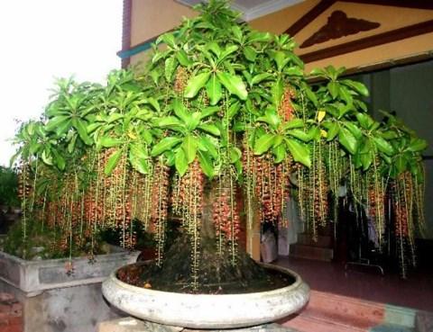Bố trí cây xanh giúp lan tỏa sinh khí