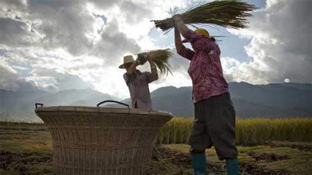 Khiếp hàng trong nước, dân TQ lùng mua gạo ngoại
