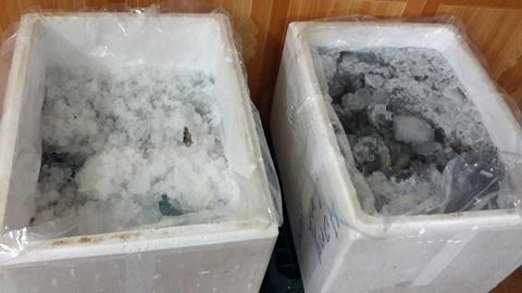 Phát hiện cơ sở bơm bột vào tôm đông lạnh ở Hà Nội