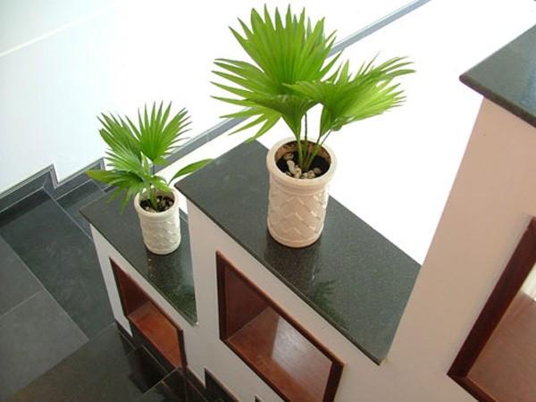 Trang trí nhà bằng cây nhỏ trên bậc hành lang
