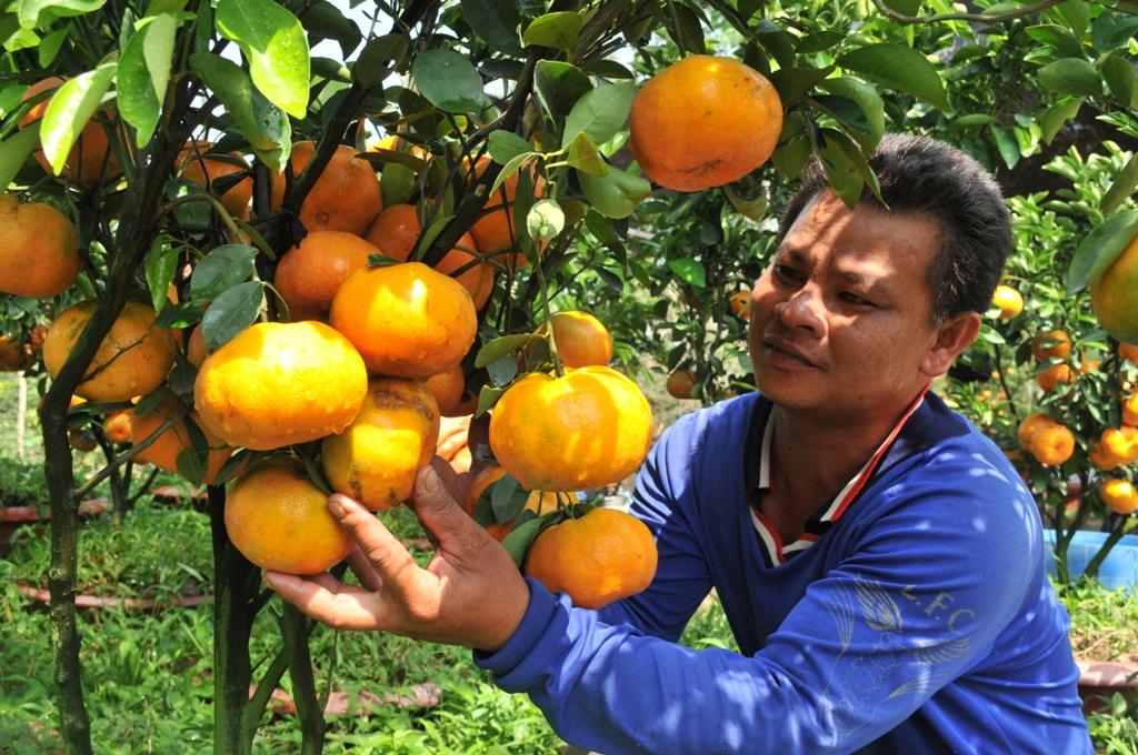 Tùy theo dáng cây và số trái trên cây sẽ có giá khác nhau, trung bình từ 2 - 4 triệu đồng/chậu.