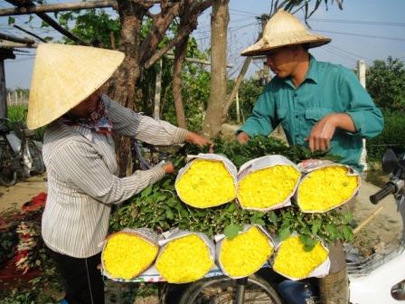 Hoa nở sớm đươc vận chuyển đem bán phục vụ thị trường ngày giáp Tết.