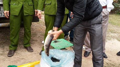 Bắt giữ hơn 6 tấn cá Trung Quốc