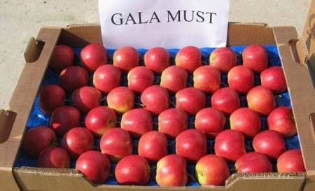 Cục BVTV mới đang xem xét và chưa cấp phép nhập khẩu táo Ba Lan vào Việt Nam (Ảnh minh họa)