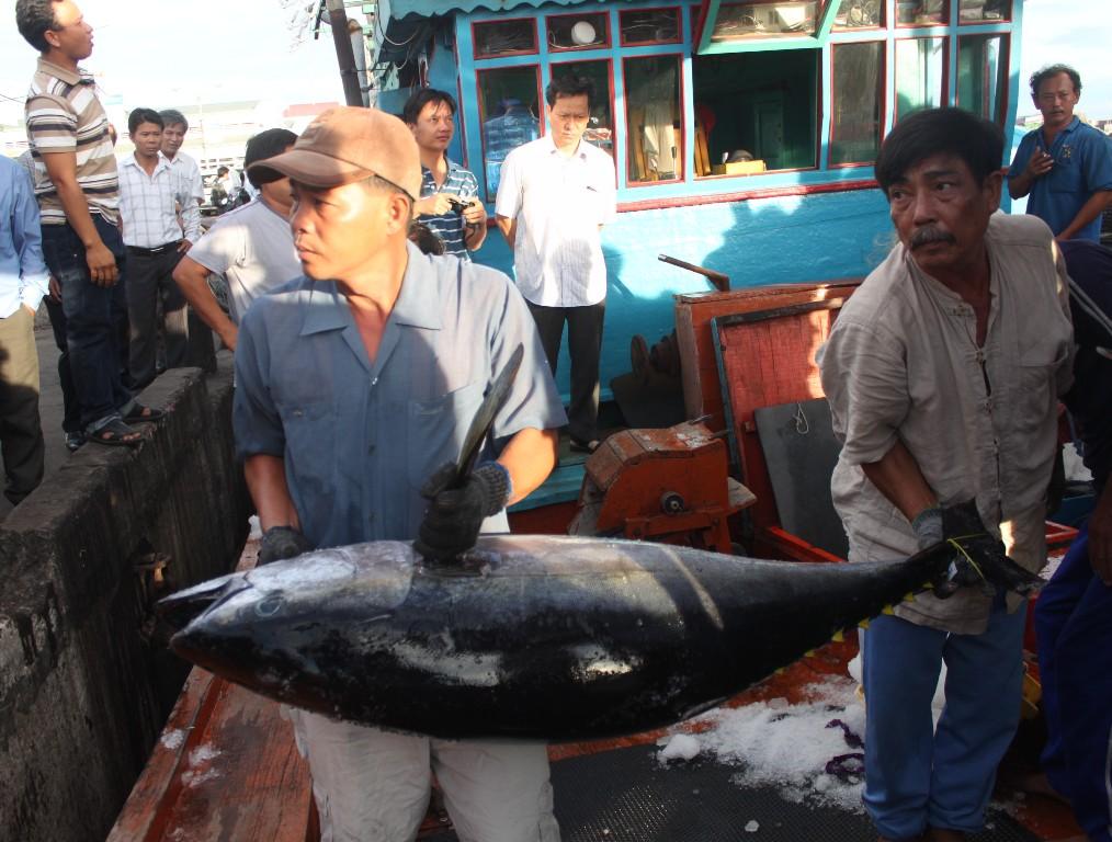 Bình Định: 7 con cá ngừ đại dương lên máy bay qua Nhật Bản