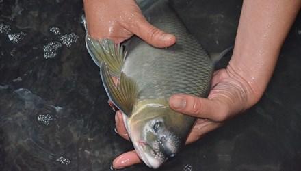Quà biếu cá Anh Vũ giá hàng chục triệu đồng dịp Tết