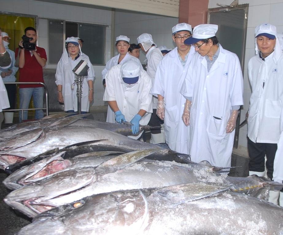 Câu cá ngừ đại dương kiểu Nhật: Ngư dân vẫn chưa làm đúng quy trình