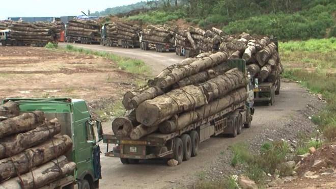 """Quy định """"đá"""" nhau, doanh nghiệp gỗ chịu trận"""