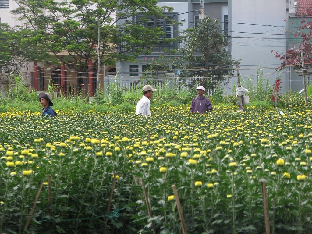 Giá mỗi cặp chậu hoa được nông dân bán từ khoảng 180 - 400 ngàn đồng