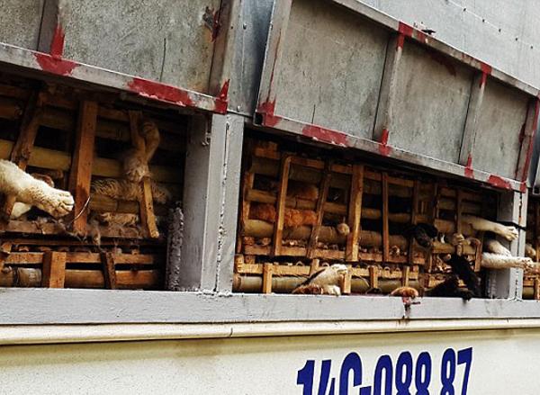 3 tấn mèo tuồn vào Việt Nam để ăn giải đen: Báo Tây 'choáng'