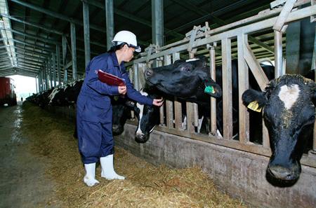 Tính minh bạch và tính hai mặt của chuyện nông dân đổ sữa
